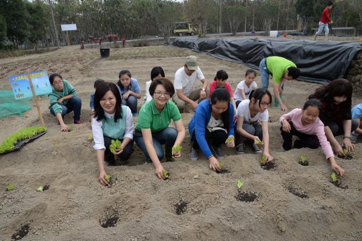 大埔社區公共有機景觀菜圃種下希望與食材安全