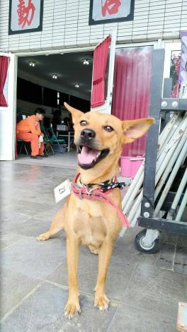 雲林縣動植物防疫所配合本年度行政院農業委員會舉辦之「106年度全國家犬絕育競賽」活動於9-10月針對水林鄉及其他縣內有報名參賽之鄉鎮村里集中辦理免費下鄉家犬絕育活動,競賽期間合計全縣共絕育231隻家犬、173隻家貓。