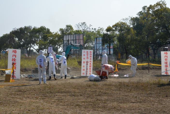 防疫人員進行豬隻屍體掩埋及焚燒