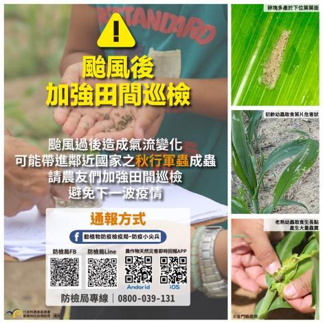 颱風遠離防疫不鬆懈  呼籲農民加強田間巡查秋行軍蟲