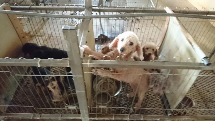 北港非法犬貓繁殖場照片1