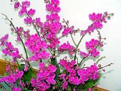 flower(1)