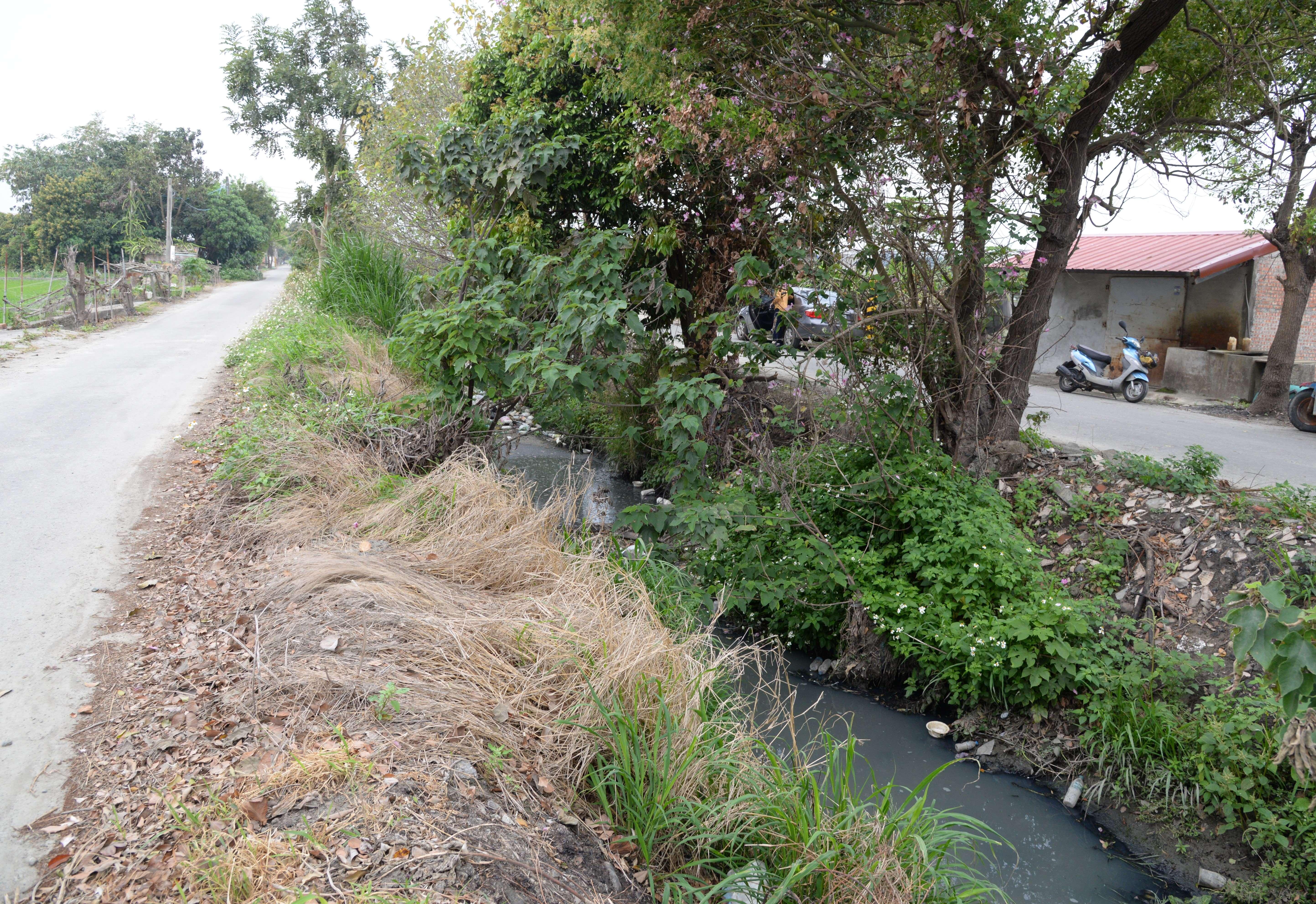 二崙大排部分段落尚未治理,兩岸皆為土堤邊坡,因雜草、灌木叢生,嚴重阻礙通水斷面。