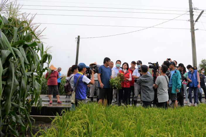 豪雨影響,玉米倒伏、落花生、水稻及甘藷也傳災情,農民反映損失慘重,望縣府協助爭取災害救助