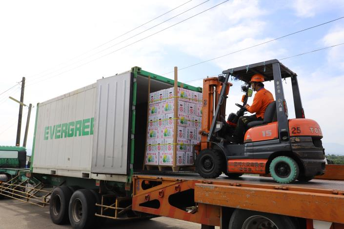 斗六文旦將外銷至新加坡,今日裝櫃準備出口。