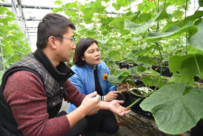 張縣長至溫室觀看小黃瓜種植情形