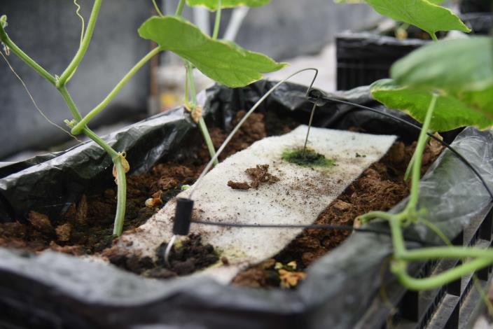 微醺農場以2年時間開發離地介質栽培技術