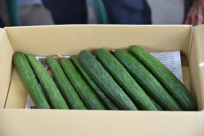 微醺農場採用智慧科技種出鮮脆可口的小黃瓜