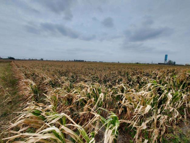農作物寒害災損持續浮現 請農漁民持續做好防寒工作