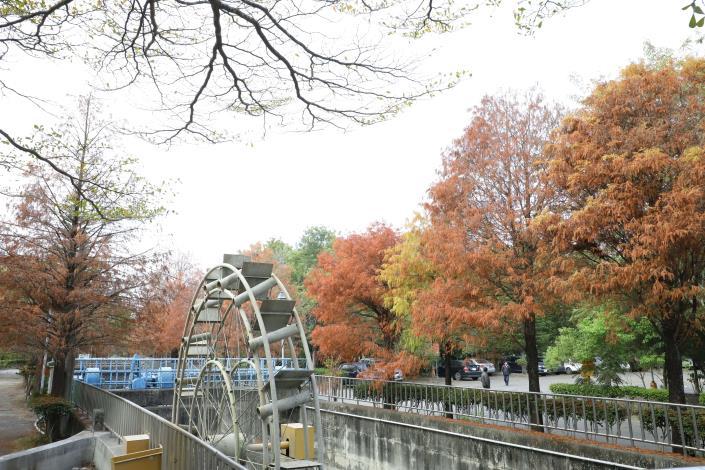 林內冬季可賞落羽松。