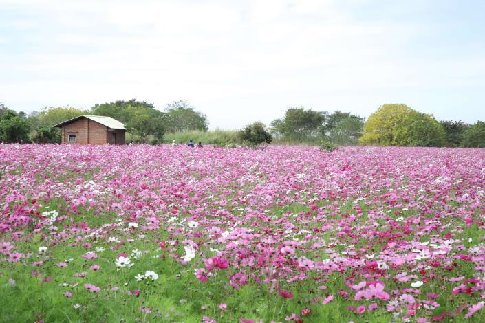 林內鄉美麗的農村景致。