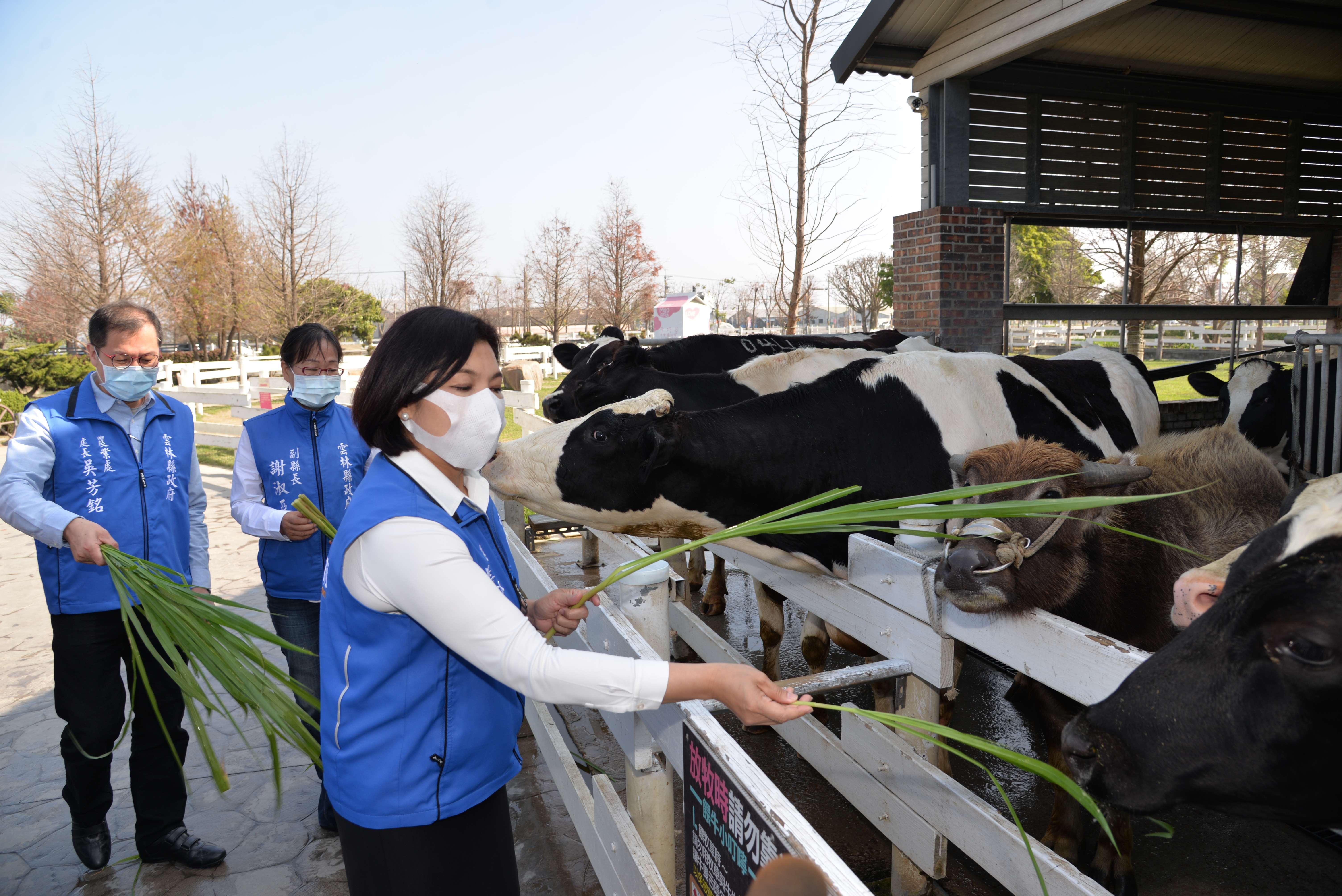 崙背鄉是台灣四大生乳產區之一,並是台灣第一個酪農專區