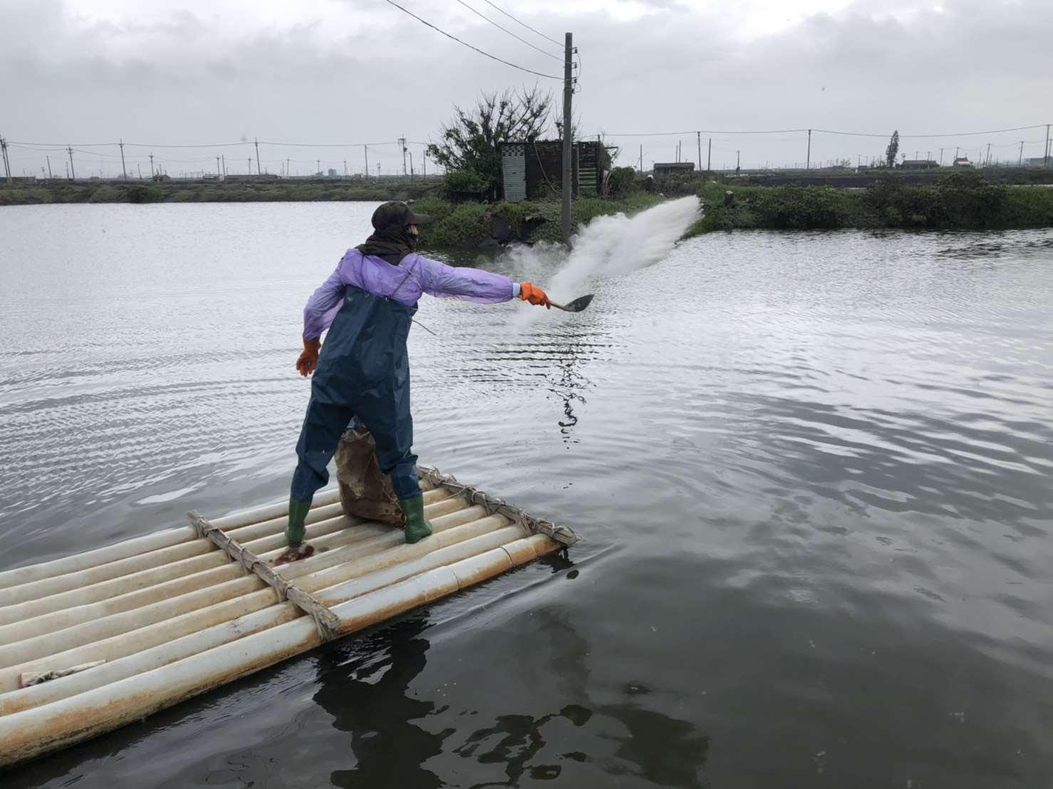 豪雨過後加強養殖管理工作 漁農不擔憂