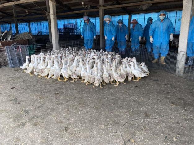 新型H5N2亞型禽流感病毒現蹤 籲「禽」落實防疫