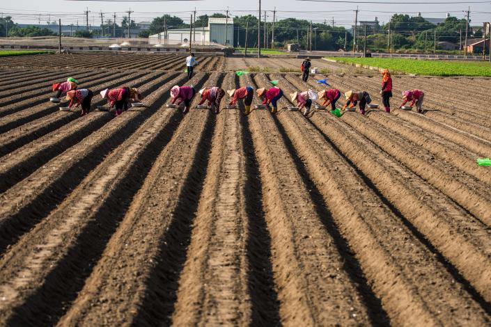 佳作-海193-黃鈺媗-農忙的季節