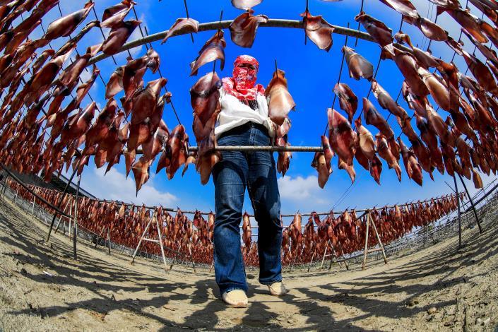 海340-佳作-潘同正-口湖-晒魷魚