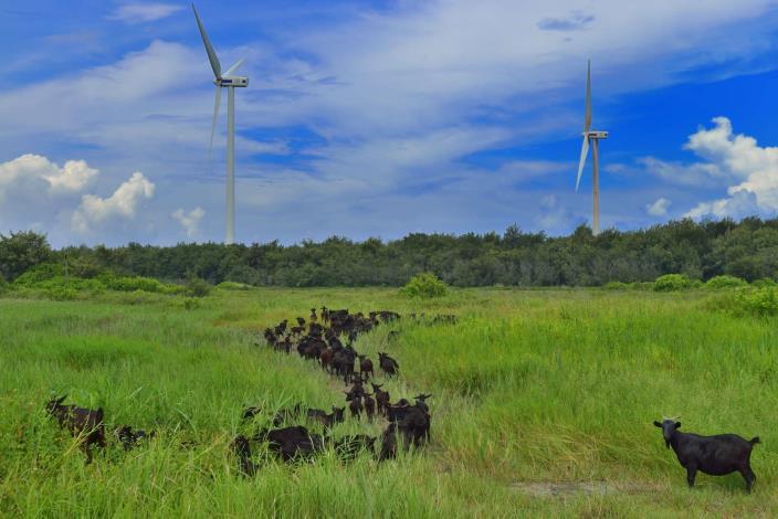 電力設備組佳作_吳明福_風吹草低牧羊群