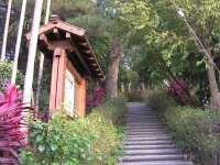 龍過脈森林步道-2